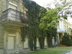 Обросшее зеленью здание на улице Малая Морская