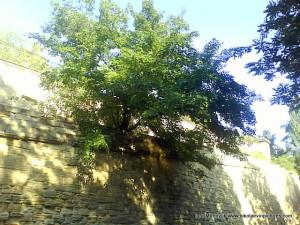 Сверху над стенами, деревья висят.