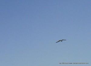 Парящая птица в небе
