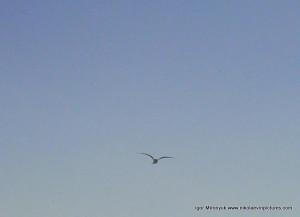 Над берегом, бывает, летают птицы.