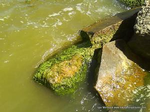 Много мокрых камней, некоторые мхом обросли.
