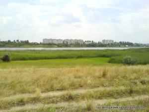 Полуостров Аляуды, зелёные камыши, река Ингул, Водопой