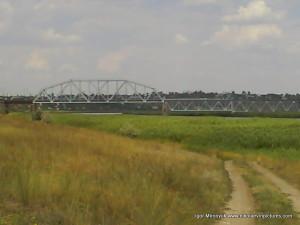 Аляуды, зелёные камыши и железнодорожный мост