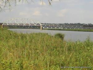из-за камышей виден железнодорожный мост